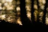 fotoforum Akademie 2019: Naturfoto-Workshop im Teutoburger Wald mit Karsten Mosebach