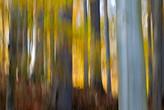 fotoforum Akademie 2016 Fotoworkshop Herbst im Harz und an der Ilse