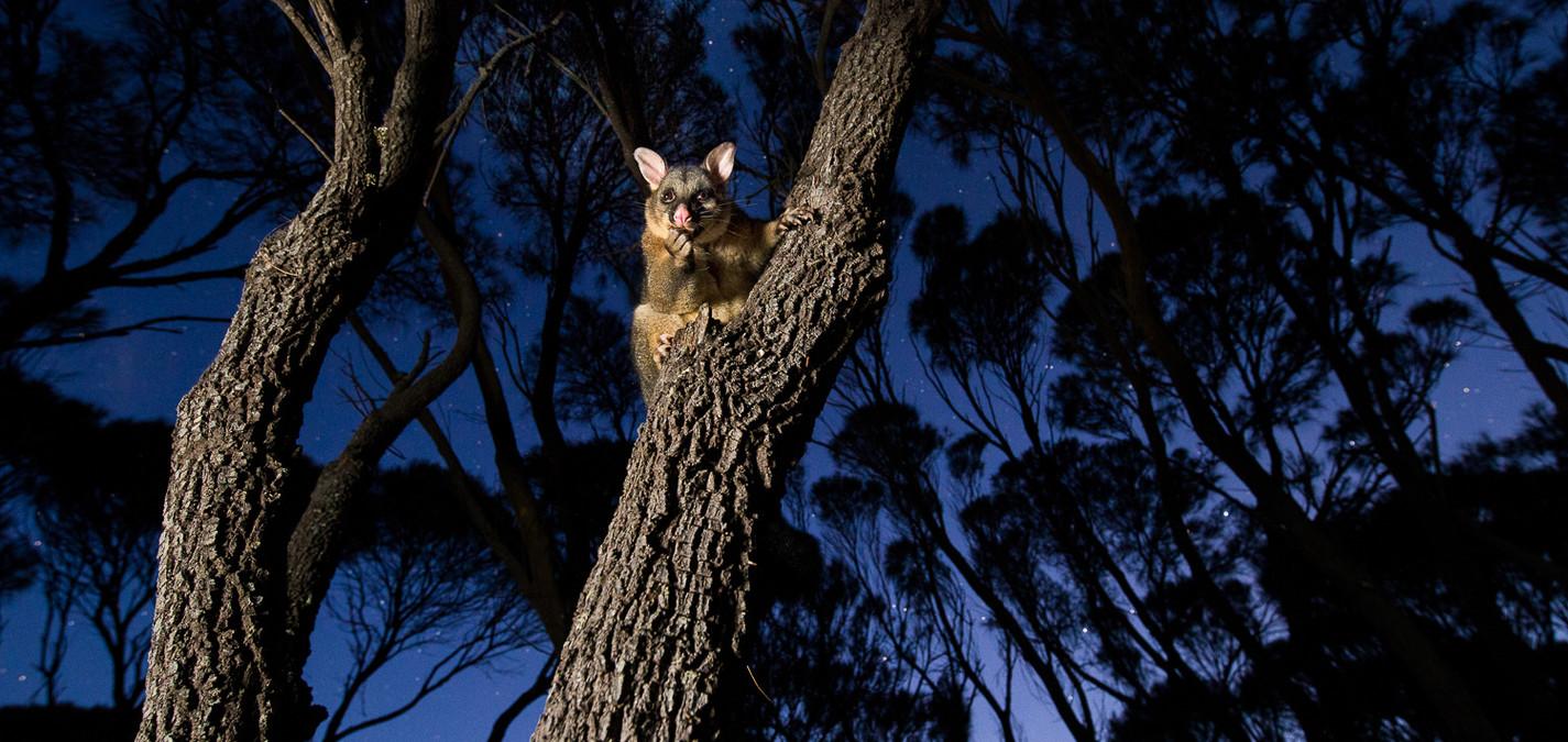 Fotoreise Tasmanien Hermann Hirsch und Karsten Mosebach in Tasmanien fotoforum