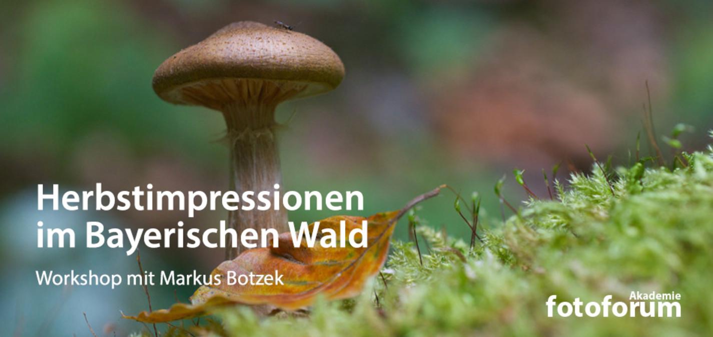 fotoforum Akademie: Herbstimpressionen im Bayerischen Wald
