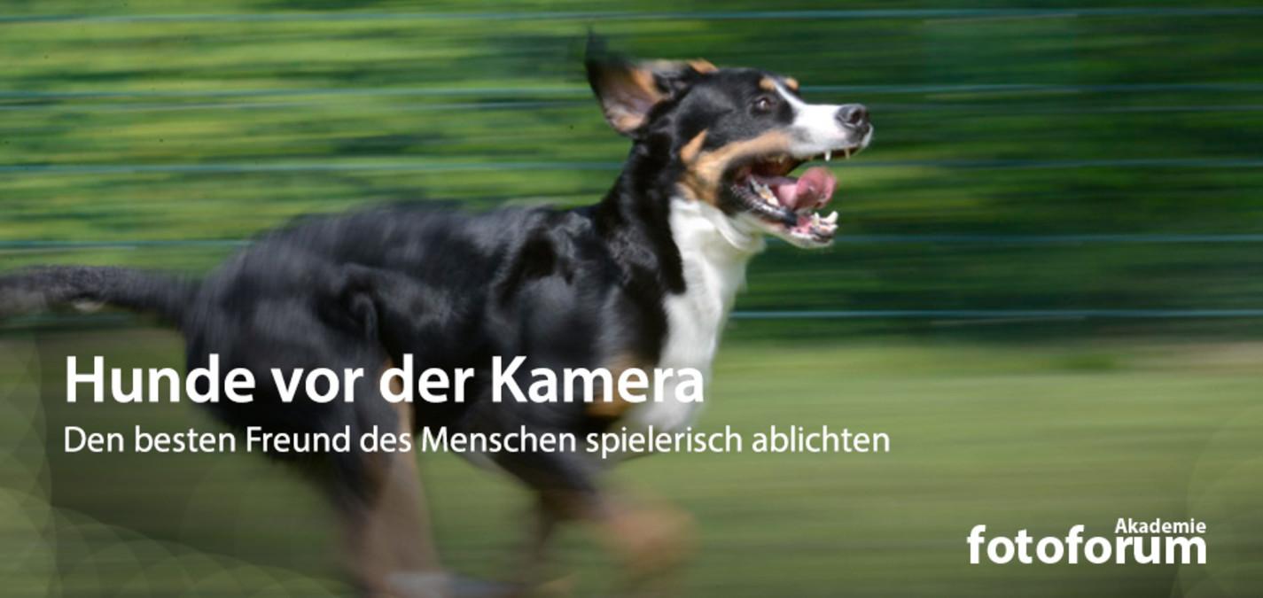 fotoforum Akademie: Hunde vor der Kamera