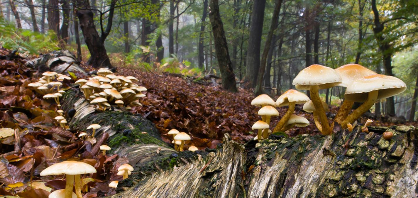 fotoforum Akademie 2019 Fotoworkshop Herbst im Harz und an der Ilse