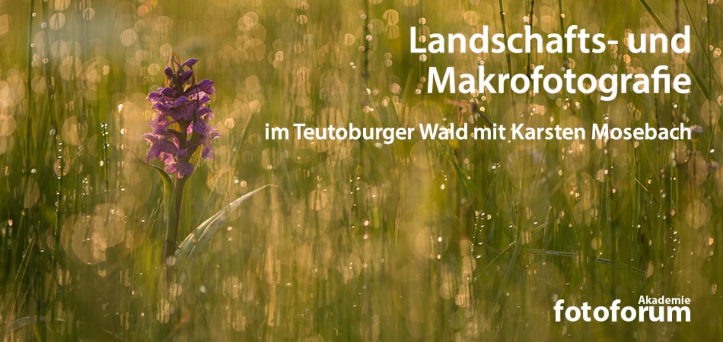 fotoforum Akademie: Landschafts- und Makrofotografie im Teutoburger Wald