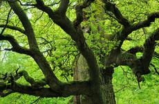 Urwald und Tierpark Sababurg